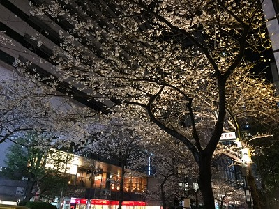 nihonbashi cherry blossoms top.jpg