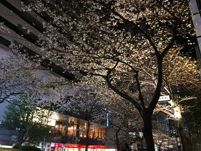 nihonbashi cherry blossoms top.jpg