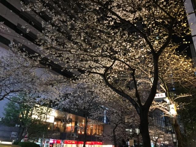 nihonbashi cherry blossoms.JPG