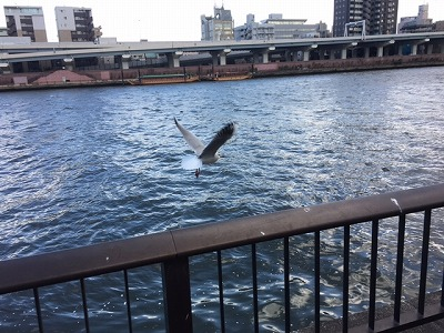 sumida river top.jpg